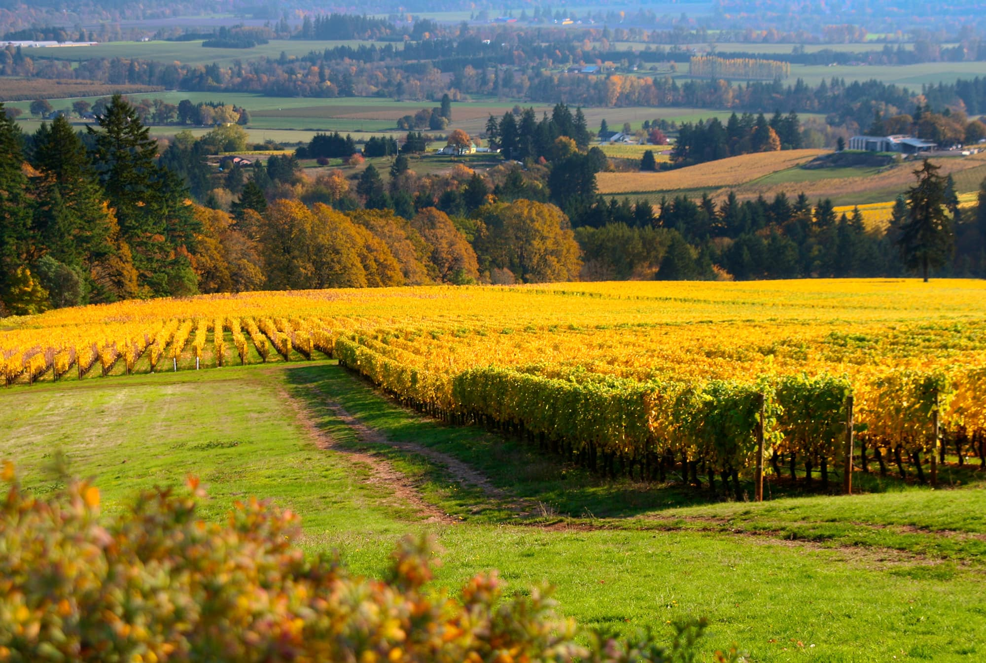 Oregon's Wine Country Thanksgiving Will See COVID-19 Changes