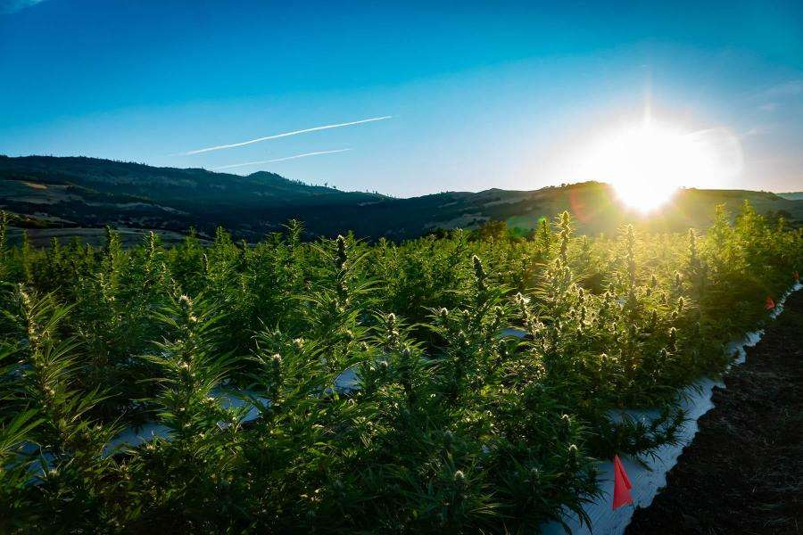 Medical Marijuana's Impact on Utah Real Estate