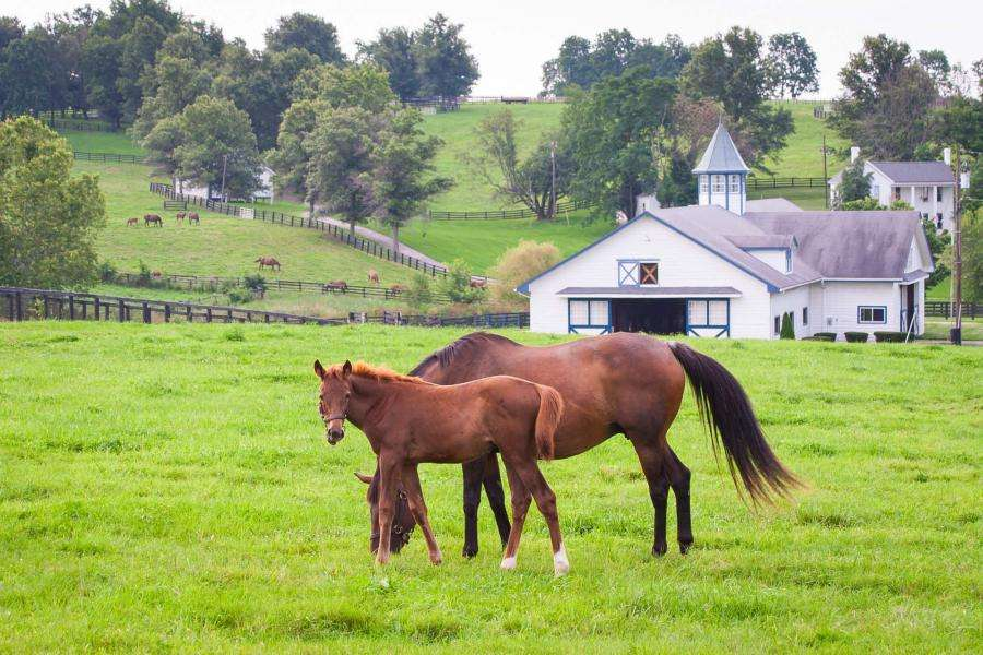 Home on the Range: What Buyers Look for in Equine Property
