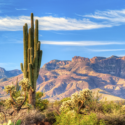 Arizona CE:Arizona Contracts and Contract Law (Contract Law)